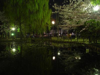 yosakura_R0010386.jpg